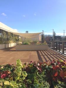 Ed Roberts Campus Garden